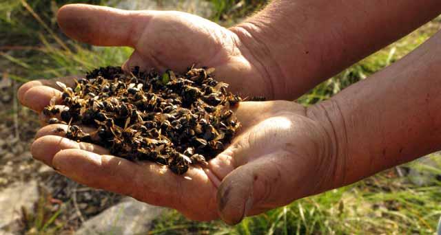 """""""Si les abeilles disparaissent, les jours de l'homme sont comptés"""" Disparition-des-abeilles"""